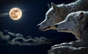 A két farkas