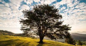 A gondok fája