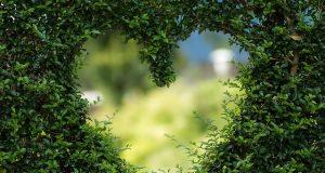 Minél többet ajándékozok el szívemből, annál több marad nekem.