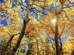 Babits Mihály: Magyar szonett az őszről