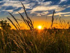 Sík Sándor – Mint fű a szélben