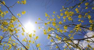 Dsida Jenő – Alázatos, könyörgő zsoltár