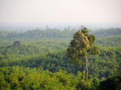 Kétezer kancsin keresztény rekedt a dzsungelben