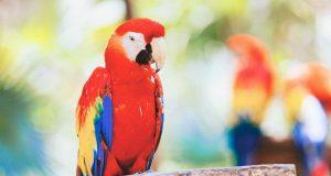 Milyen papagájt vegyünk?