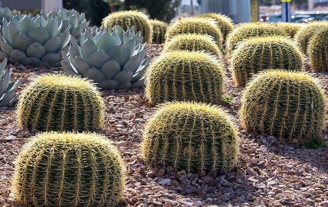 Különleges kaktusz