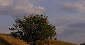József Attila: Szeretném, ha vadalmafa lennék