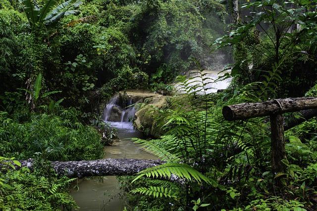 Ketten a dzsungelben
