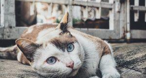Az állatok a mennyországba juthatnak?
