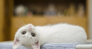 Gárdonyi Géza: A cica