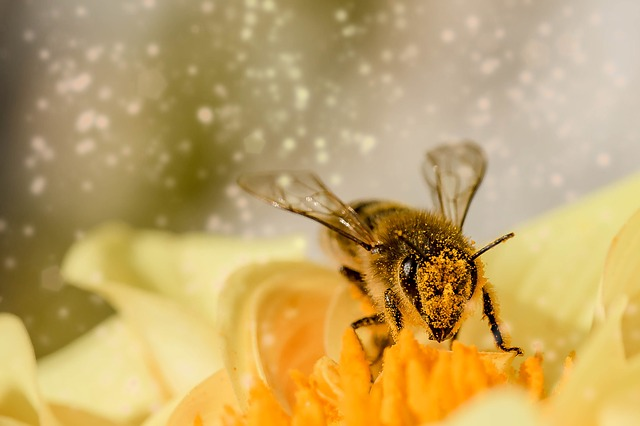 Méh és darázs