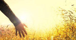 Kosztolányi Dezső: Egy kézre vágyom