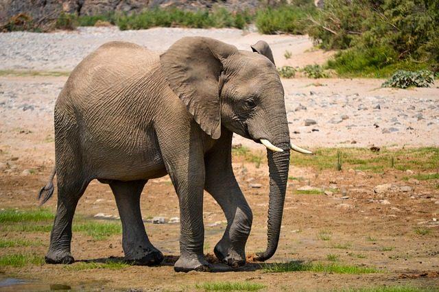 Az elefánt és a bolha