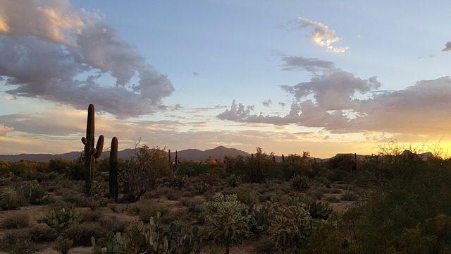 Sündisznók a sivatagban